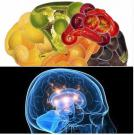 Foods That Help Improve Your Memory #Ethiopia